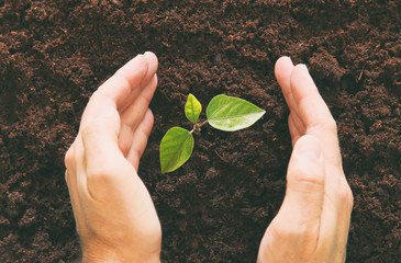 Top view of human hands are planting the young plant in the fresh ground. new start and ecology concept.