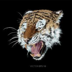 Tiger head on black background vector illustration.