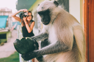 close-up view of funny monkey holding green fruit and girl holding camera behind