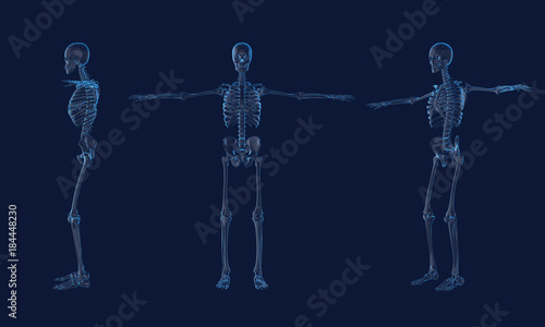 X Ray Human Skeleton Anatomy3d Rendering Stock Photo And Royalty