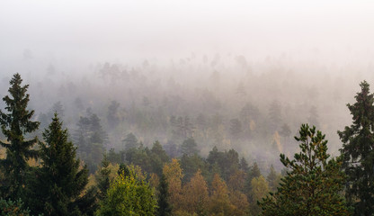 Morning fog and woodland landscape in Torronsuo National Park, Finland