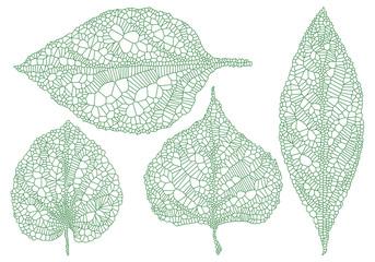 green vein leaves, vector set