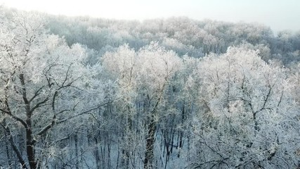 Wall Mural - Aerial view of winter forest covered by snow and hoarfrost, tilt view 4k
