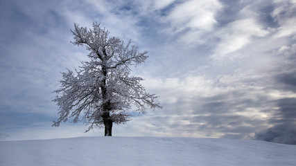 Winter landscape, background for chrismas cards, desktop - with snowy tree with dramatic sky with evening clouds - christmas card background, Planina, Slovenia