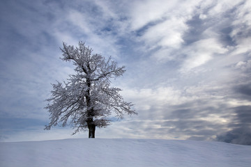 Winter landscape with snowy tree with dramatic sky with evening clouds