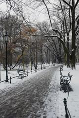 empty path in the winter scenery Planty Park in Krakow, Poland