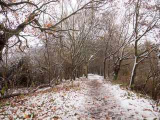 winter country forest path bare branches scene nature