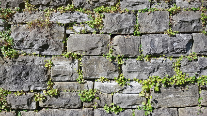 Dry stone wall with plants