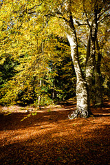 Mountain bike under amazing autumn coloured trees and leaves