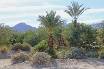 Desert Laandscape