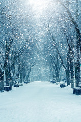Printed kitchen splashbacks Light blue Winter nature, snow alley