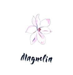 Flower of magnolia, watercolor hand drawn, illustration