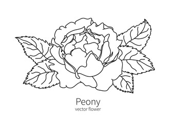 Vector peony icon. Lined flower isolated icons for polygraphy, web design, logo, app, UI.