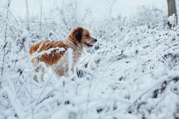 Dog in snowy frost grass