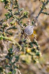 Bright snail