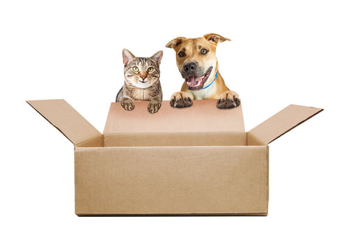 Happy Dog and Cat Over Empty Shipping Box