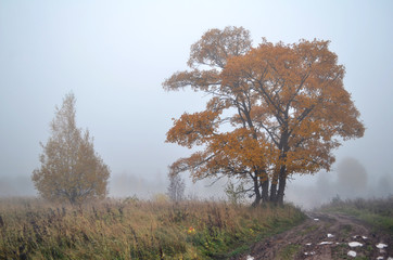 yellowed tree in the fog during the autumn leaf fall