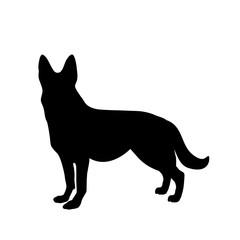 Black silhouette of german shepherd dog standig sideway