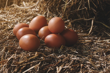 The lifestyle of the farm in the countryside, fresh eggs from the farm in the countryside.