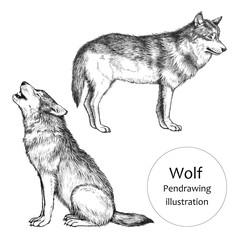 オオカミ_ペン画