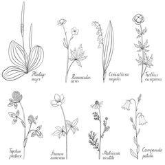 Set of drawing flowers and plants