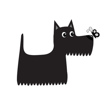 Scottish terrier black dog looking to butterfly insect. Scottie puppy. Cute cartoon character. Pet animal collection. Adopt concept. Flat design. White background. Isolated.