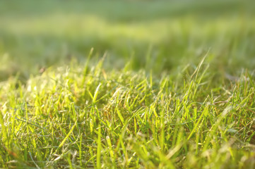 Beautiful background with a green lawn on a Sunny day with a shallow depth of field. Closeup. Copy space.