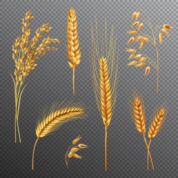 Realistic Cereals Transparent Background Set