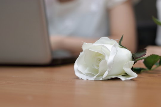 White rose on the desk in office on Valentine's day. Love and romance concept.