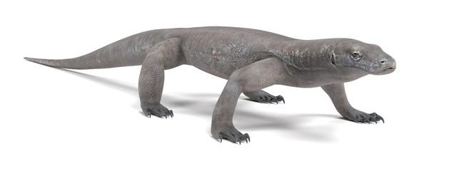 Realistic 3D Render of Komodo Dragon