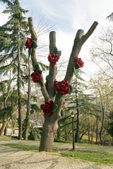 Decoration made of red roses on a big old tree in a park in Istanbul