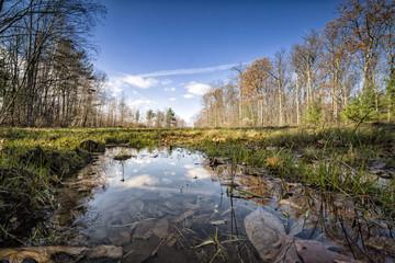 reflejos y bosques