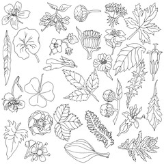 2215257 Botanical elements with hand drawn flowers and plants