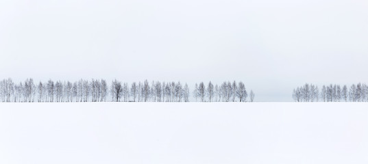 Winter minimalistic landscape. A row of bare trees against a white snow and white sky background.