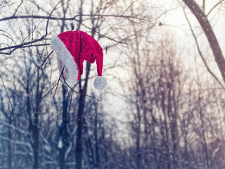 Santa Claus forgot his red hat with fur on a tree branch in a snowy forest. The day after the celebration of the New Year