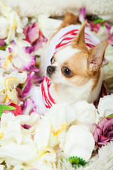 The dog sits surrounded by flowers