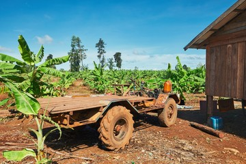 Truck in the banana plantation