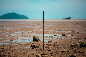 Mud flats on low tide with boat wreckage and mountain background