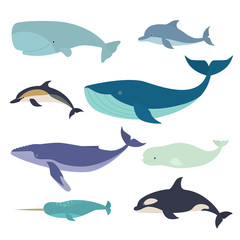 Set of vector whales and dolphins. Vector illustration of marine mammals, such as narwhal, blue whale, dolphin, beluga whale, humpback whale and the sperm whale.