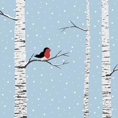 Birch trees on winter background