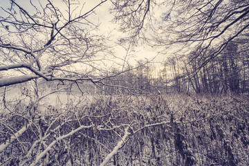 Frozen branches in a forest with frost