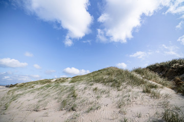 Sand dunes on a nordic beach in the summer