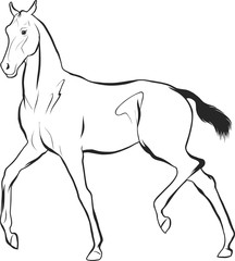 A sketch of a freely trotting foal.