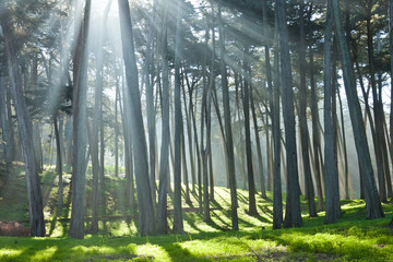 presidio Cypress Grove