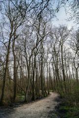 Path running through a forest