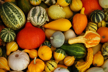 Colorful Pumpkin & Zucchini Varieties C