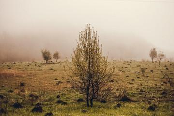 Morning landscape in the field