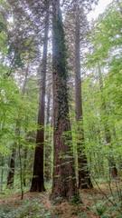Wirtschaftswald