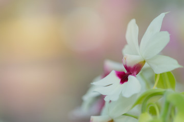 Orchid flower in tropical garden. Free from copy space.