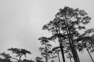 Trees in bw (black and white)